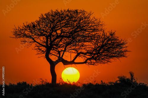 Türaufkleber Afrika Sonnenuntergang mit Schirmakazie in Afrika