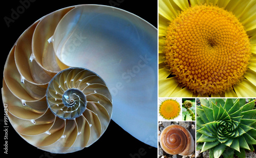 Beautiful Phi / Golden Ratio Spirals in Nature