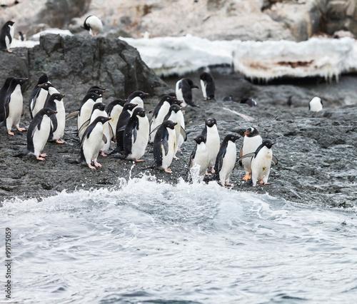 Tuinposter Pinguin penguin in nature