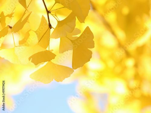 Tuinposter Zwavel geel イチョウ 黄葉