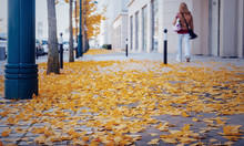 Yellow Fallen Leaves On Cobble...