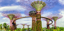 Landscape Of The Supertree At ...