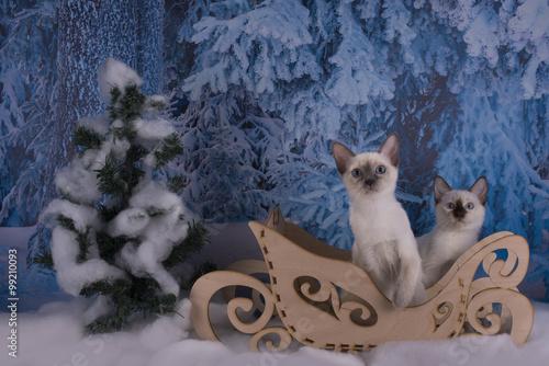 Foto op Aluminium Imagination Thai kitten playing in the winter forest