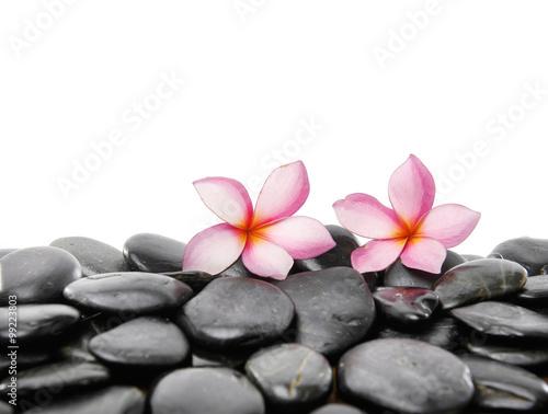 Aluminium Prints Spa pink frangipani on black pebbles