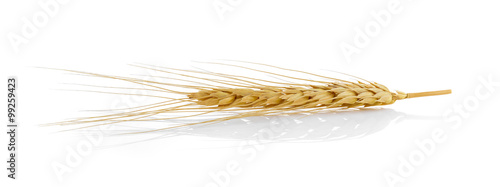 Fotografia Closeup of a barley ear over a white background
