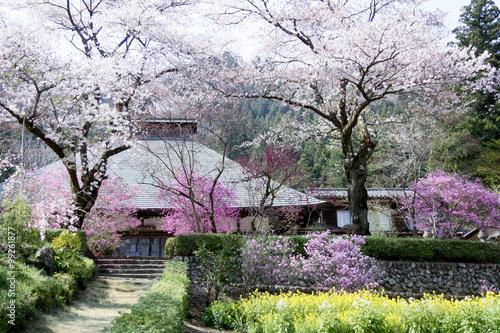 Tuinposter Azalea 桜咲く