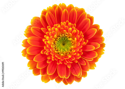 Carta da parati Orange gerbera flower isolated on white.