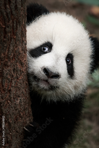 Photo cute little panda