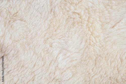 Photo sur Toile Sheep wool sheep closeup