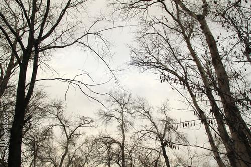 gökyüzüne uzanan ağaçlar ve dallar karanlık bir günde gerçek üstü bir sanatsal t Plakat
