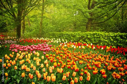 Obraz wiosenne kwiaty w ogrodzie - fototapety do salonu