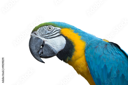 Silly Macaw isolated on white background