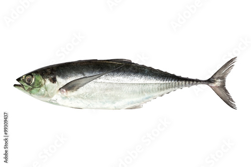 Fotografija  torpedo scad (Finny scad, Finletted mackerel scad)  isolated on