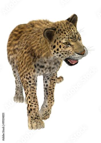 Poster Leopard Big Cat Leopard