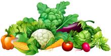 Different Kind Of Vegetables