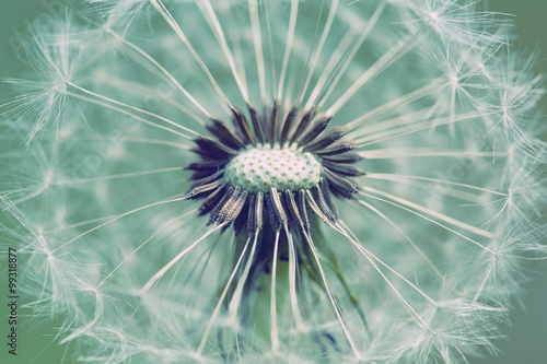 close up of Dandelion with abstract color - 99318877
