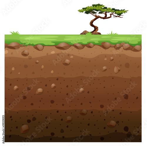 Fényképezés  Single tree on surface and underground scene