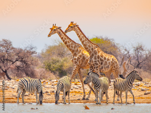 Poster Zebra Giraffes and zebras at waterhole