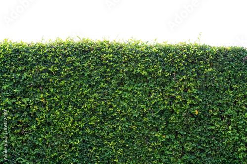 Leinwand Poster Tree leaf bushes green fence