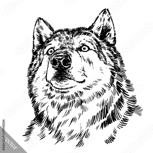 Poster Croquis dessinés à la main des animaux black and white engrave isolated wolf
