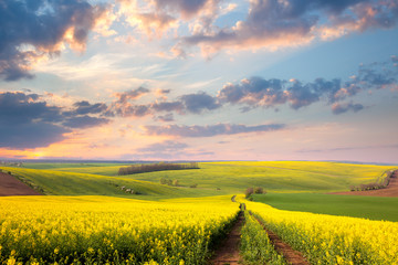 Yellow flowering fields, ground road and beautiful valley,