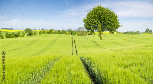 plakat wiosenne pole młodego zboża