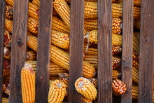 Corn In Romanian Traditional H...