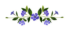 Periwinkle Flowers Composition