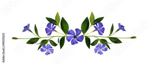 Fotografie, Obraz Periwinkle flowers composition