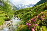 Fototapeta Mountains - Alpenrosen am Hochgebirgsbach