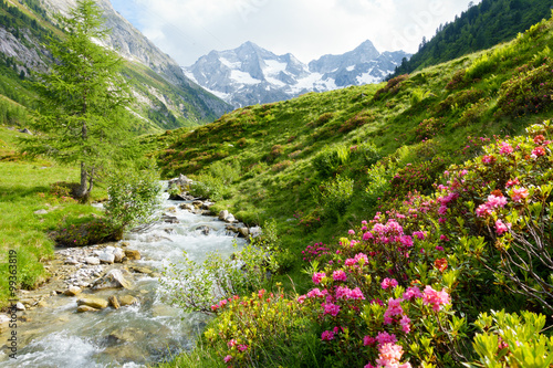 Fotografie, Tablou  Alpenrosen am Hochgebirgsbach