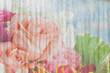 orange rose on grunge dirty wall background