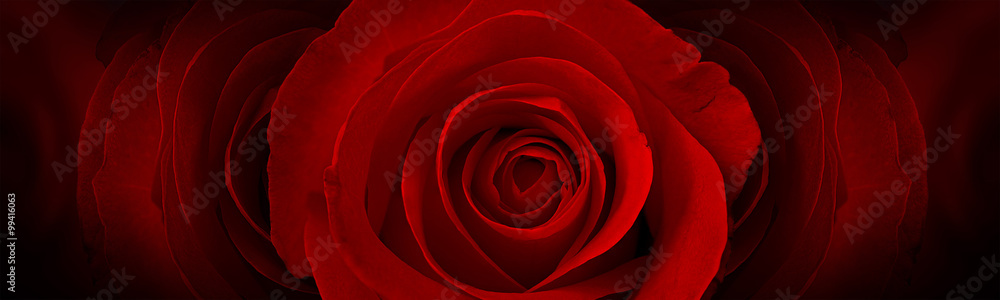 Fototapety, obrazy: red roses flower background