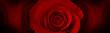 Leinwandbild Motiv red roses flower background