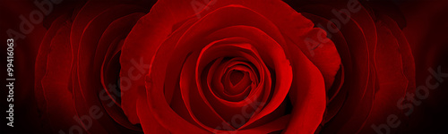 Fototapeta red roses flower background obraz