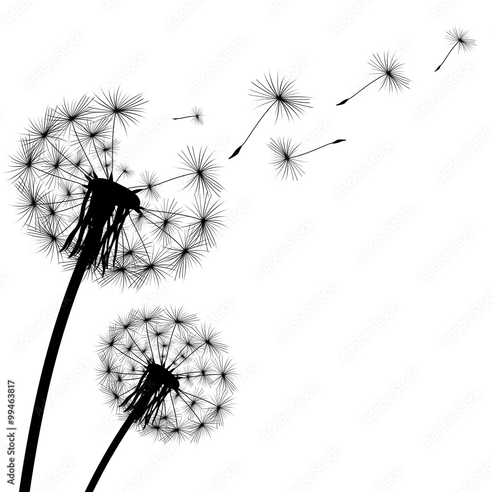 Fototapety, obrazy: black silhouette with flying dandelion buds on a white backgroun