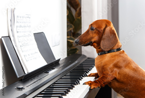 Photo Funny dog playing the piano