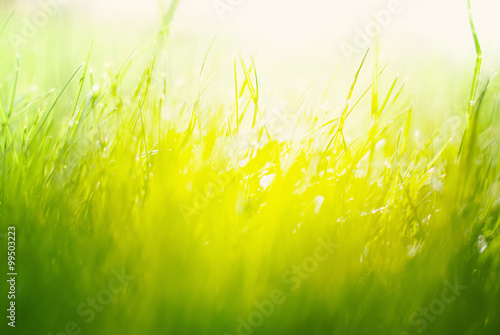 Fotografía  Background with Green Summer Landscape. Grass in Sunlight