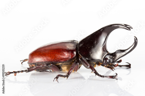 Beetle in a white background Poster