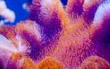 coral in deep blue sea