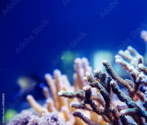 Tuinposter Koraalriffen coral in deep blue sea
