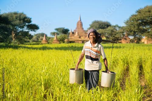 Traditional Myanmar farmer watering plant Poster Mural XXL