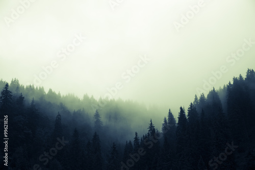 chmury-i-mgla-nad-sosnowym-lasem