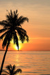 Coconut trees silhouette background sunset.