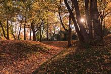 L'automne En Foret