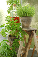 Fototapeta Plantes aromatiques