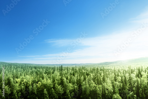 Printed kitchen splashbacks Forest forest in sunset time