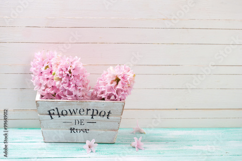 Foto-Tapete - Fresh pink hyacinths flowers in wooden box