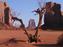Blick Durch Eine Baumgabelung Im Monument Valley