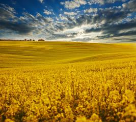 Obraz na Szkle Wiejski Pole rzepaku z pięknym niebem